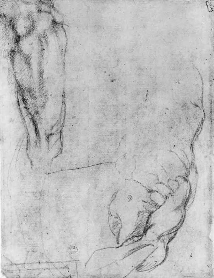 Michelangelo Buonarroti - sezione di una figura