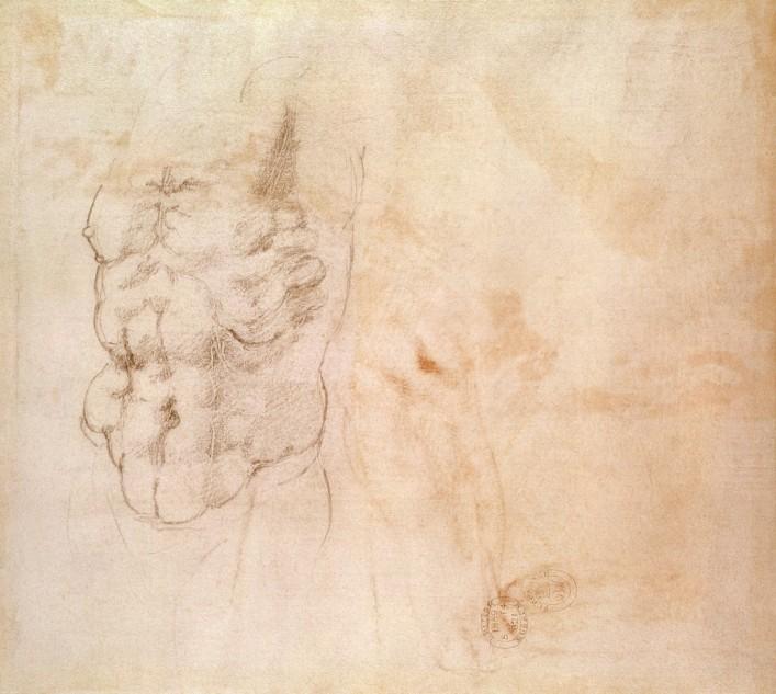 Michelangelo Buonarroti - Studio del torso